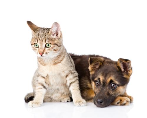 cat and dog living together.jpg